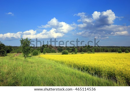 summer landscape road in blossoming fields near the forest on a sunny day
