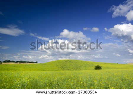 Summer landscape - saturated view of meadow. Europe, Poland.