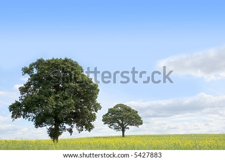 Summer landscape - trees beneath a blue sky in a field of rapeseed