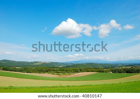 Summer landscape with cloudy sky and bent grass