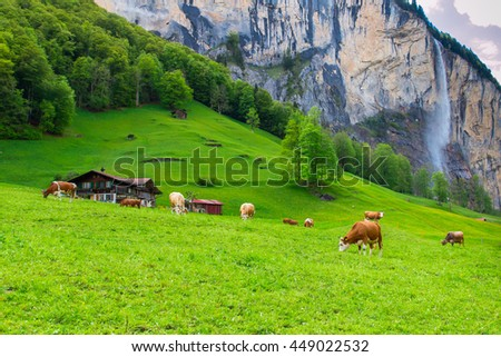 Summer landscape with cow grazing on fresh green mountain pastures and high waterfall on background.  Lauterbrunnen, Switzerland, Europe. - stock photo