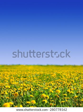 Summer landscape with dandelions meadow in sunny summer day - stock photo