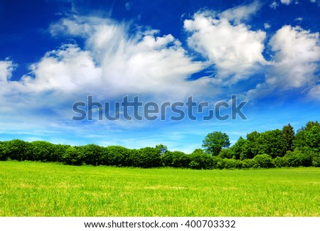 Summer landscape with field and trees.