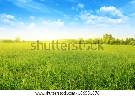 Summer landscape with field of grass,blue sky and sun.