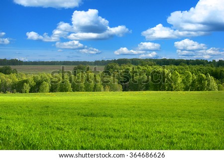 Summer Landscape with fresh Grass and Blue Sky