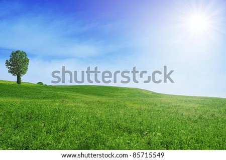 Summer landscape with green field and blue sky - stock photo