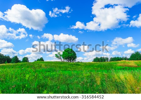 Summer landscape with green grass and blue sky - stock photo