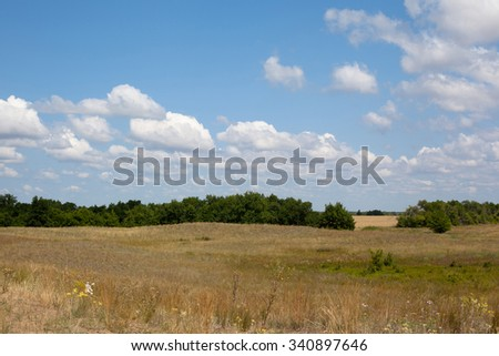 Summer landscape with green trees