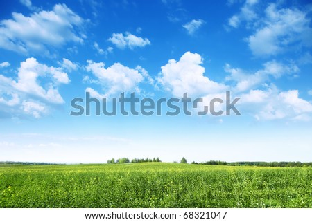 Summer landscape with rapeseed field and blue sky. - stock photo