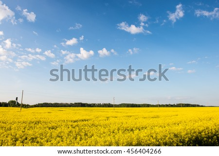 Summer Landscape with rapeseed Field and Clouds in latvia