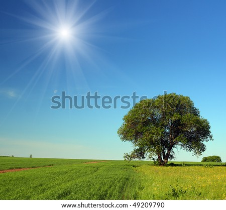 summer landscape with single tree in field