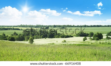 Summer landscape with trees in the field. - stock photo