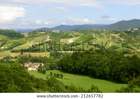 Summer landscape with vineyards in Monferrato (Piedmont, Italy)