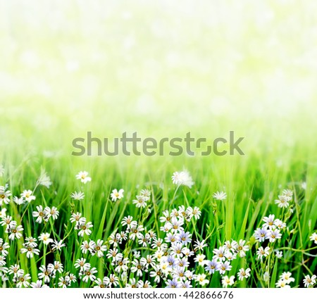 Summer landscape with wildflowers. Abstract background of white flowers