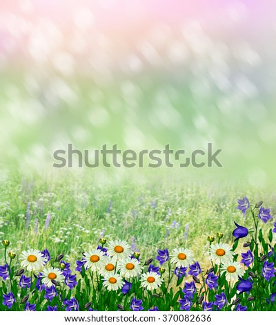 Summer landscape with wildflowers. Blue flowers lupine and white daisies.