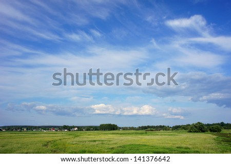 Summer meadow. Green Grass and Blue Sky - stock photo