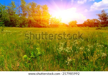 Summer meadow in nice day - stock photo