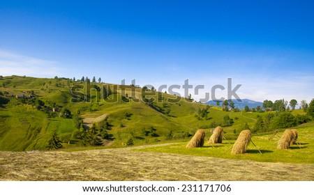 Summer Meadow in the Carpathian, Ukraine - stock photo