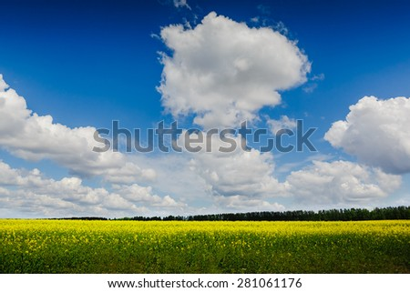 Summer meadow on bright sunny day - stock photo