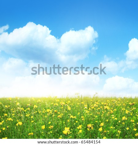 Summer meadow on sunny day. - stock photo