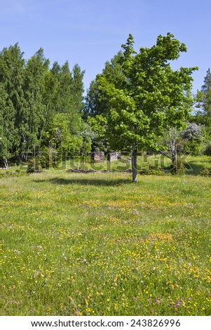 Summer meadow with deciduous tree - stock photo