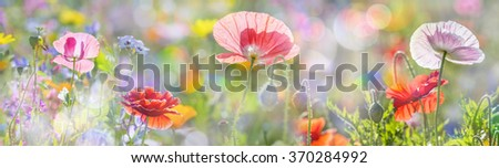 summer meadow with red poppies - stock photo
