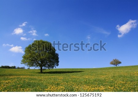 Summer meadow with trees - stock photo