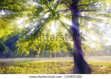 Summer morning lights under a huge tree - stock photo