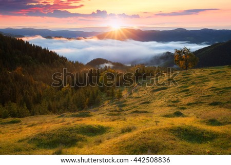 Summer morning mountains rural landscape