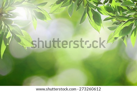 Summer morning nature bokeh with fresh green leaves in sunlight - stock photo