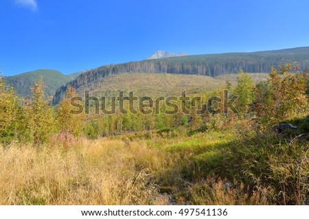 Summer mountain landscape. Beautiful hills in High Tatra Mountains, Slovakia.