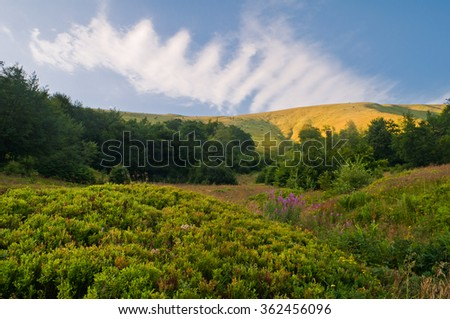 Summer mountain landscape with blueberry bushes and flowers willow-herb