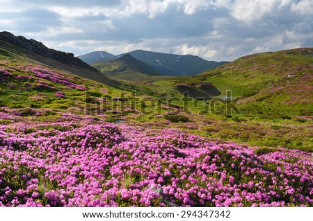 Summer mountain landscape with flowers in a meadow. Carpathians, Ukraine, Europe. Sunny day - stock photo
