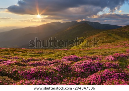 Summer mountain landscape with flowers on a slope. Beautiful evening with the sunset. Carpathians, Ukraine, Europe - stock photo