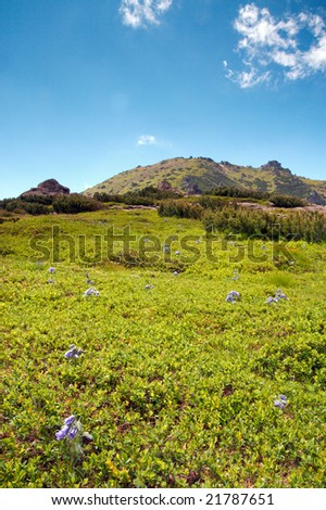 summer mountain view with blue  bell flowers on mountainside