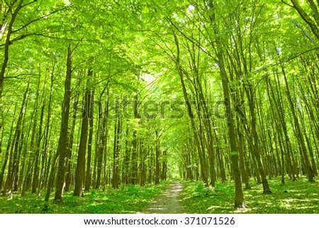 Summer nature. Path in the green forest - stock photo