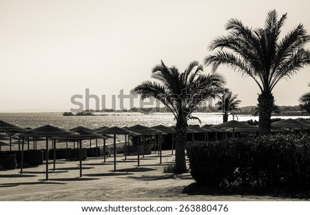 Summer on a coastline in Florida - shoreline with palms on a tropical beach. Resort vacation on a tropic beach of summertime, vintage postcard. Old photo of black and white colors in retro style. - stock photo