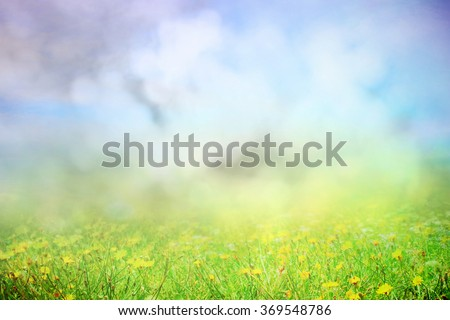Summer or spring field in morning sunlight - stock photo