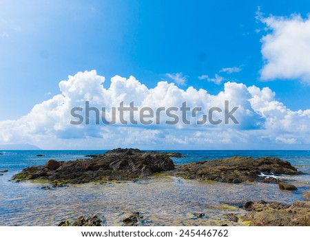 Summer Palms Dream  - stock photo