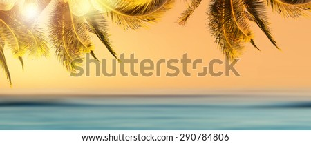 Summer, paradise, palms, beach. Design banner background with coconut palm tree and blurry ocean at sunrise. Tropical beach landscape. Panoramic view. - stock photo