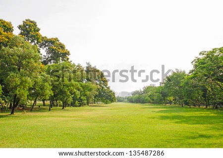 summer park, trees - stock photo