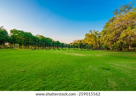 Summer park, trees and green grass - stock photo