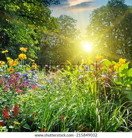 summer park with a beautiful flower bed - stock photo