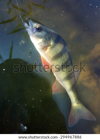 summer perch fishing bait - stock photo