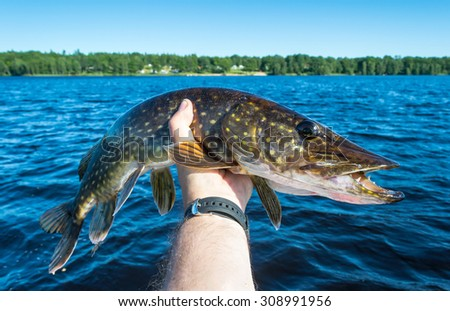 Summer pike trophy in angler's hand - stock photo