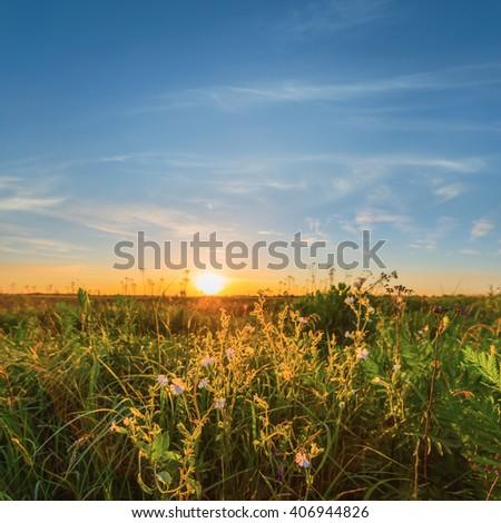 summer prairie at the sunset - stock photo