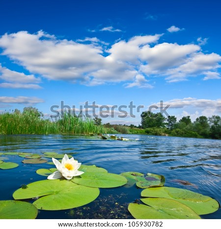summer river - stock photo