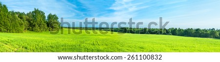 summer rural landscape a panorama with a field and the blue sky. agriculture - stock photo