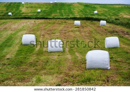 Summer rural landscape image. Field of hay bales - stock photo