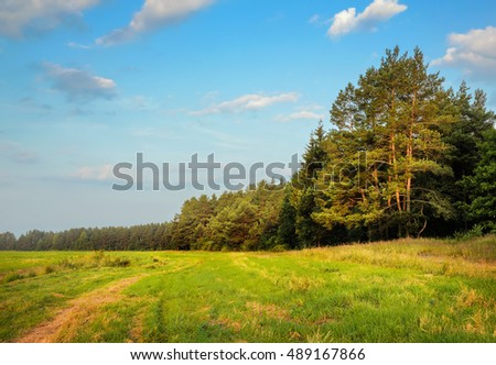 summer rural landscape with field and forest
